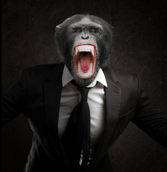 Frustrated Monkey In Business Suit